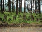 """Hutan wisata di desa Serang......sejuk """